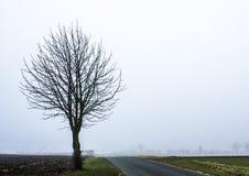 Árvore na névoa Foto de Stock