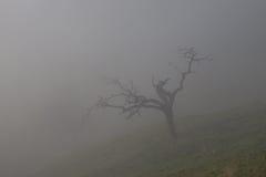 Árvore na névoa Fotos de Stock Royalty Free