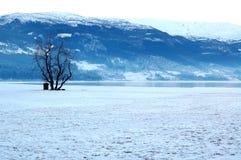 Árvore na neve Imagens de Stock