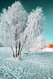 Árvore na neve fotografia de stock royalty free