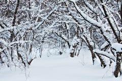 Árvore na neve Imagens de Stock Royalty Free