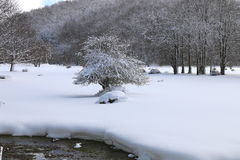 Árvore na neve Imagem de Stock