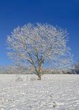 Árvore na neve Foto de Stock Royalty Free