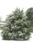 Árvore na neve do SC Fotografia de Stock Royalty Free