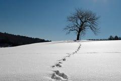 A árvore na neve ilumina pela Lua cheia na noite. Fotografia de Stock