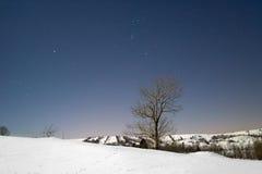 A árvore na neve ilumina pela Lua cheia na noite. Imagens de Stock Royalty Free