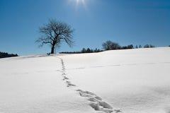 A árvore na neve ilumina pela Lua cheia na noite. Imagem de Stock Royalty Free