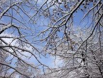 Árvore na neve no fundo do céu azul Imagem de Stock Royalty Free
