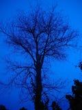 Árvore na noite fotos de stock