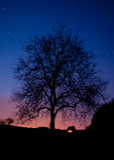 Árvore na noite Imagens de Stock Royalty Free