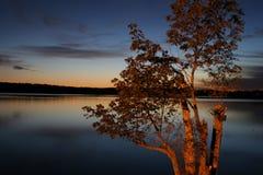 Árvore na noite Fotografia de Stock