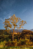 Árvore na noite fotos de stock royalty free