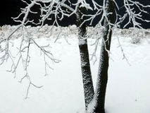 Árvore na noite na neve Fotos de Stock Royalty Free