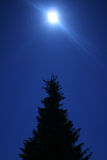 Árvore na obscuridade Fotografia de Stock