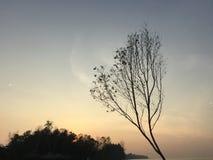 Árvore na onda dourado-azul Imagens de Stock