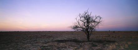 Árvore na paisagem árida Fotos de Stock Royalty Free