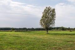 Árvore na paisagem Foto de Stock