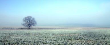 Árvore na paisagem congelada fotografia de stock