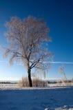 Árvore na paisagem invernal Fotos de Stock