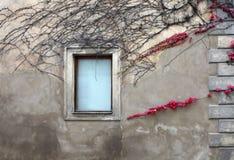 Árvore na parede imagem de stock
