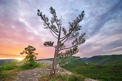 Árvore na parte superior da montanha Fotografia de Stock Royalty Free