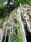 Árvore na pedra Foto de Stock