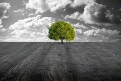 Árvore na planície concreta imagens de stock royalty free