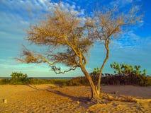 Árvore na praia Fotos de Stock Royalty Free