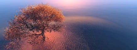 Árvore na praia Imagens de Stock Royalty Free