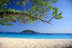 Árvore na praia bonita no console similan Fotografia de Stock Royalty Free