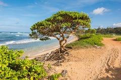 A árvore na praia em Kauai Fotos de Stock Royalty Free