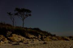 Árvore na praia na noite imagem de stock royalty free