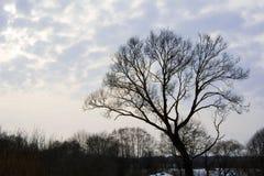 A árvore na primavera Imagens de Stock