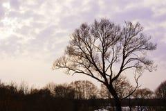 A árvore na primavera Fotos de Stock