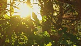 Árvore na primavera retroiluminada vídeos de arquivo