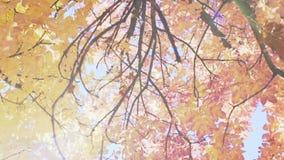 Árvore na queda filme