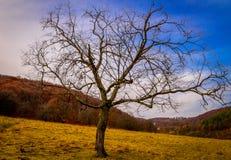 Árvore na queda Foto de Stock