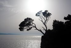 Árvore na rocha imagem de stock royalty free