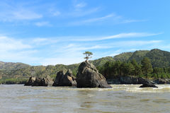 Árvore na rocha Foto de Stock