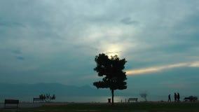 A árvore na silhueta da natureza e das nuvens e dos povos video estoque