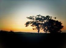 Árvore na sombra imagens de stock
