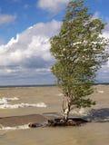 Árvore na tempestade Imagens de Stock