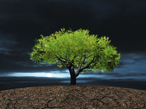 Árvore na terra seca rachada Fotografia de Stock