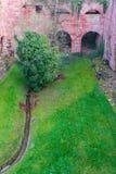 A árvore na torre da ruína do castelo de Heidelberg em Heidelberg Imagem de Stock