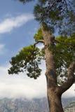 Árvore nas nuvens Fotografia de Stock Royalty Free