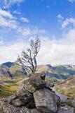 Árvore nas pedras Foto de Stock Royalty Free