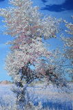 Árvore nas regiões pantanosas Foto de Stock