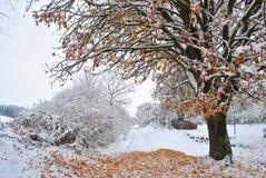 árvore nevado fotos de stock
