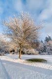 árvore nevado Foto de Stock