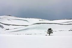 Árvore nevado do campo imagem de stock royalty free